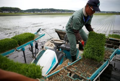 A farmer using rice planting machine conducts rice transplanting in Ryugasaki, Japan, 26 June, 2017 (Photo: Reuters/Issei Kato).